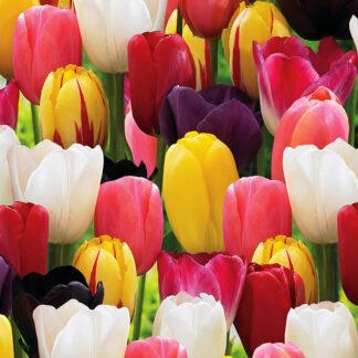 Acqusista all'ingrosso pacchetti di bulbi di tulipano colorati, un mix di fantasia, freschezza e gioia per gli occhi