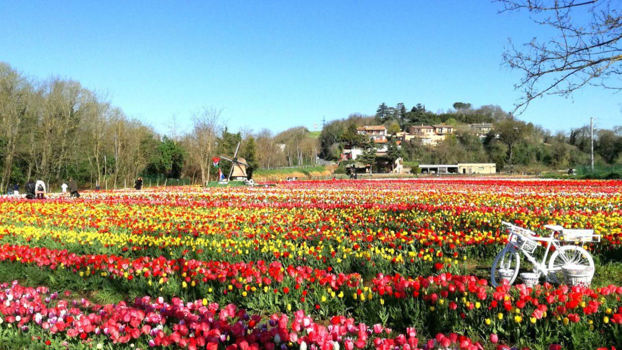 Permalink to: Vieni a scoprire un angolo di Olanda a Roma in Primavera