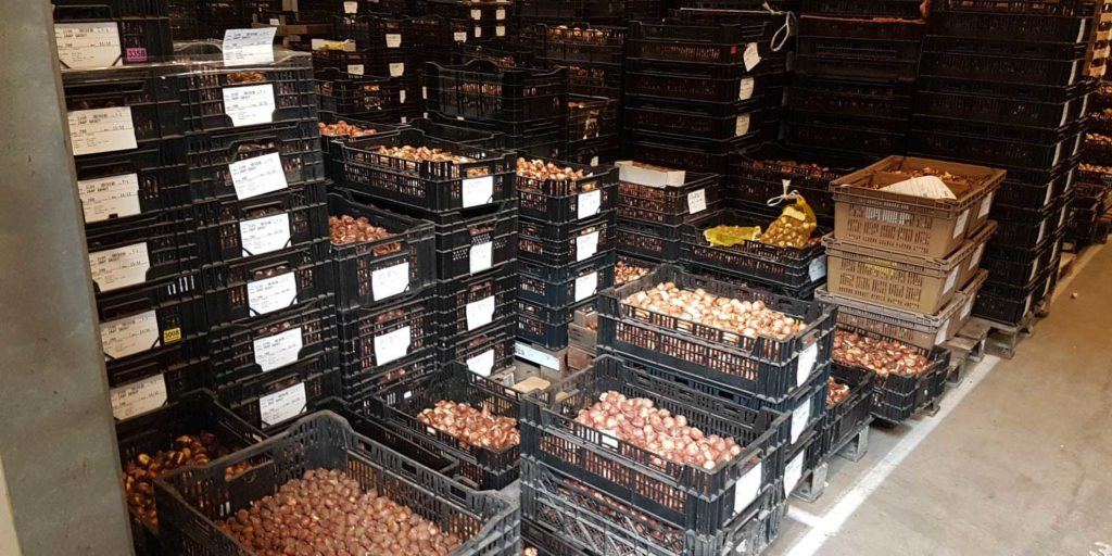 TuliPark in Olanda per selezionare i bulbi!!