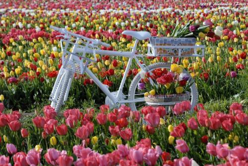 bici a tulipark roma